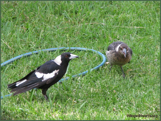 Vicky magpie with daughter Shelly